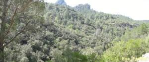 Cazorla [1600x1200]