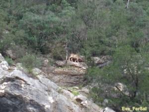 Cazorla ruta río Borosa 05_04_09 (37) [1600x1200]